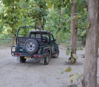 Wilderness Experience at Jim Corbett